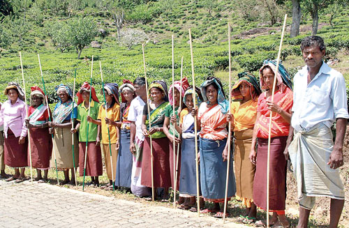 Tea Plantation Workers in Sri Lanka